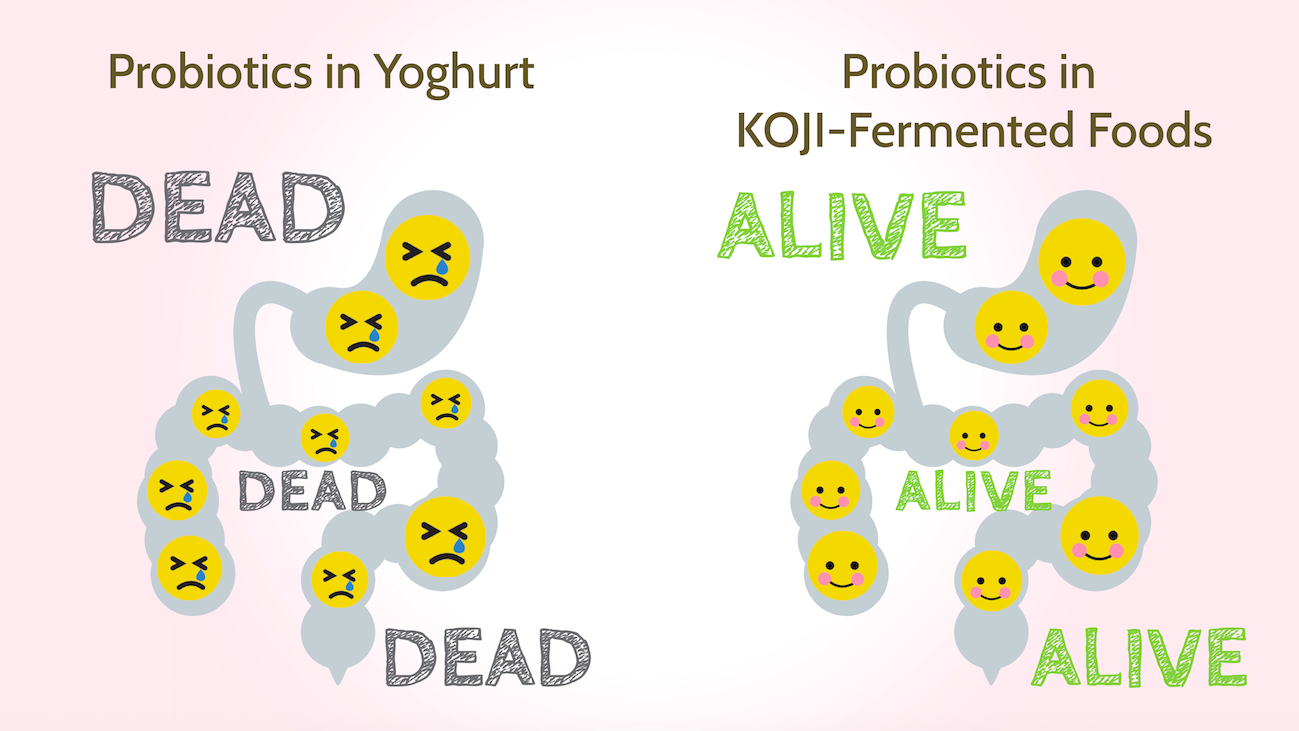 alive probiotics in koji fermented foods